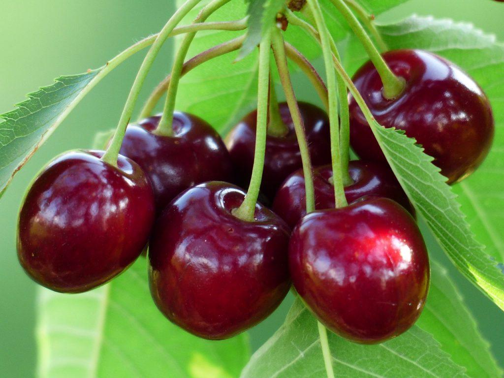 Frutas de verano cerezas